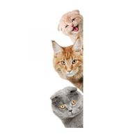 3D Wall Stickers Cats PVC Self Adhesive Removable DIY Decoration