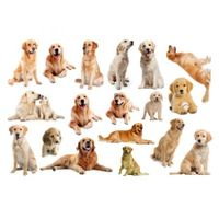 3D Wall Stickers Dogs PVC Self Adhesive Removable DIY Decoration Golden Retriever